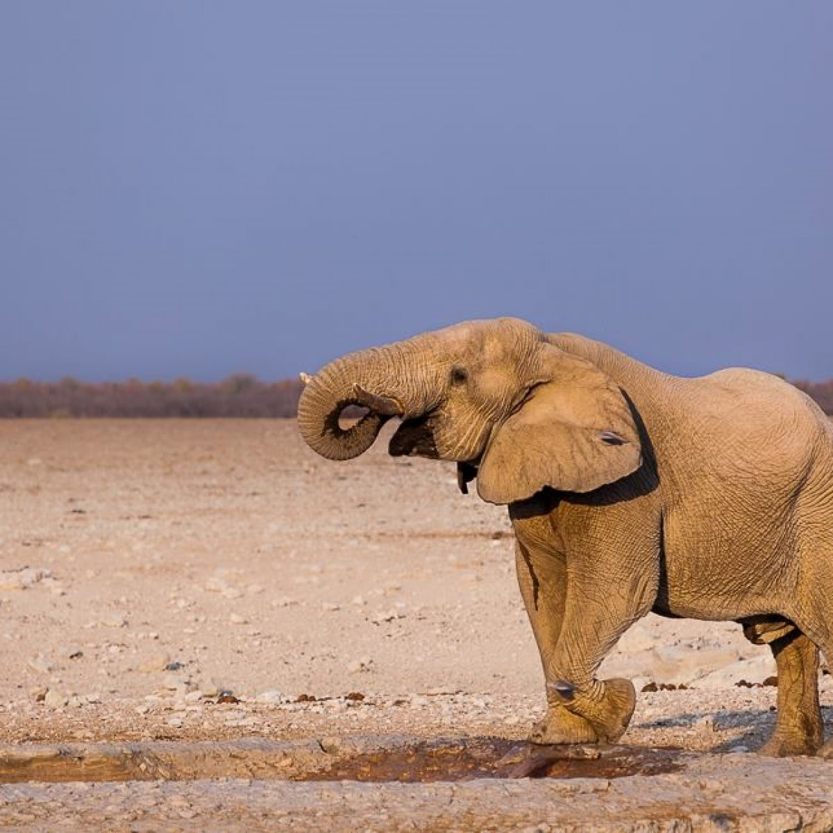 20 day Namibia Selfdrive